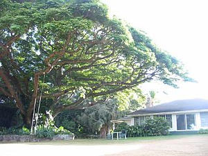 Maui01